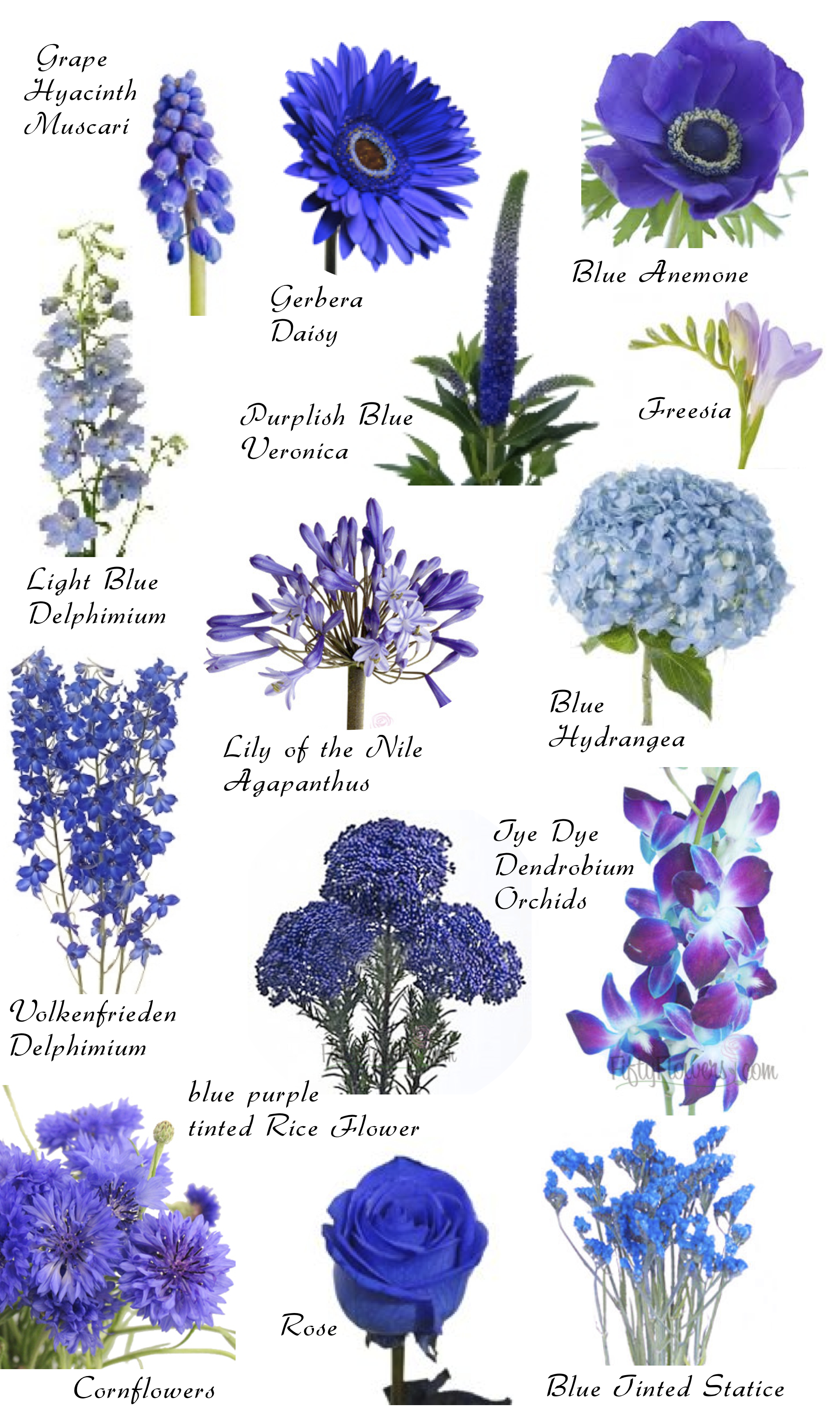 Names of blue flowers flower names by color