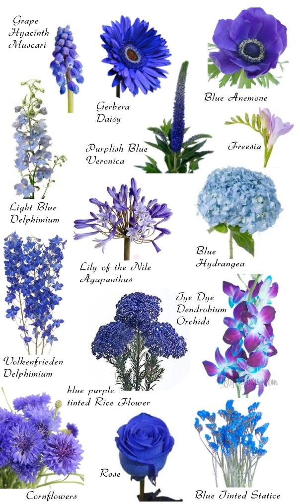 spring flower clipart photographs