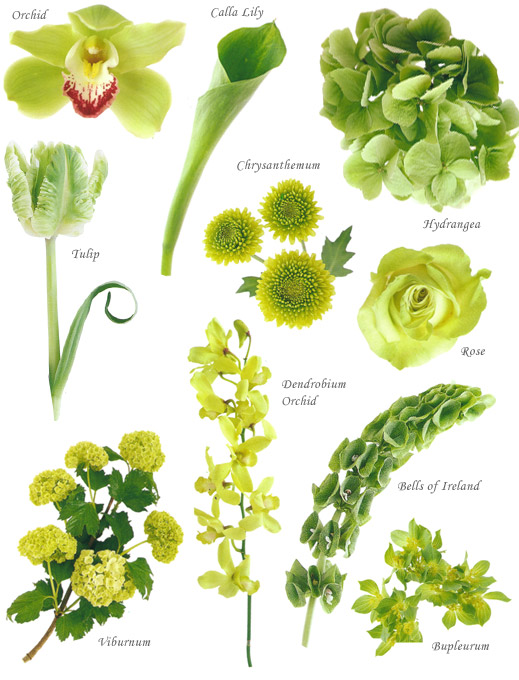 flower names by color  hayley's wedding tips, Natural flower