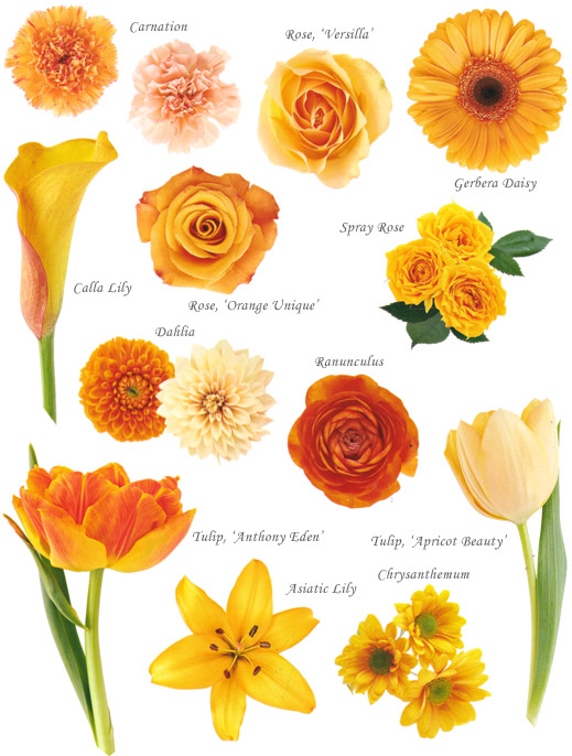 Orange flowers hayley 39 s wedding tips 101 for Popular fall flowers
