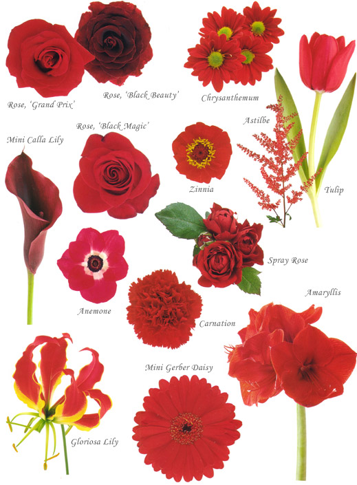 Red colored flowers