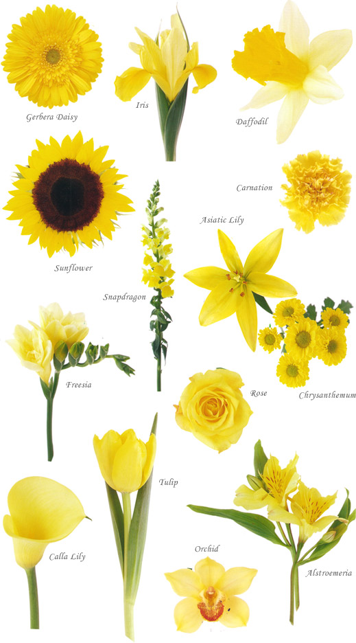 Flower names by Color | Hayley\'s Wedding Tips 101