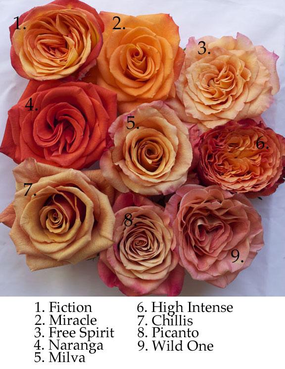 Peach and Orange credit: flirtyfleurs.com
