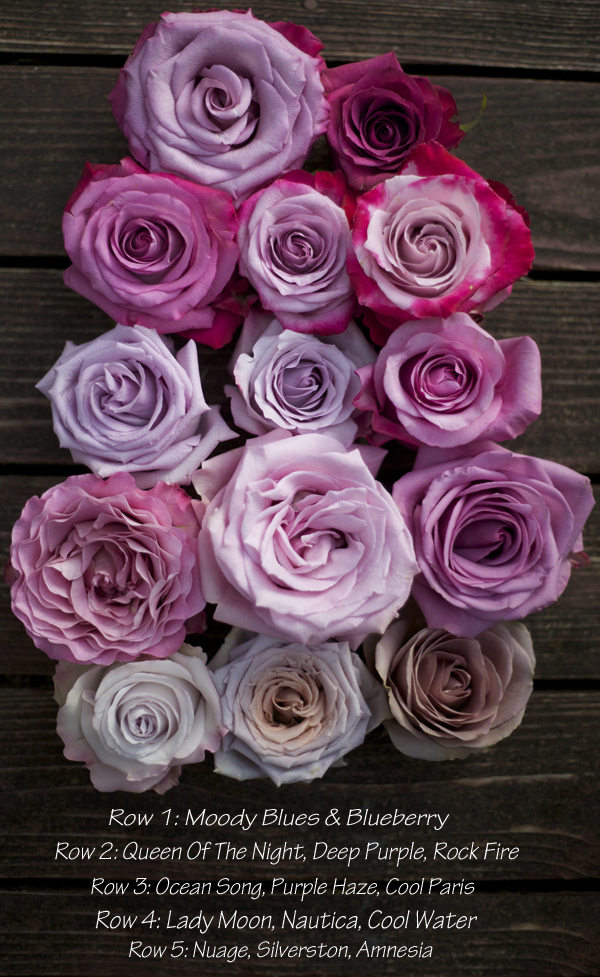 Lavender and Purple credit: flirtyfleurs.com